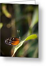 A Butterfly Rests On A Leaf Greeting Card