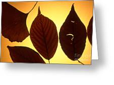 5 Autumn Leaves Greeting Card