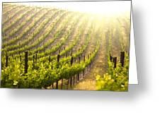 Beautiful Lush Grape Vineyard Greeting Card