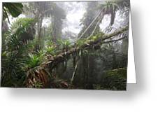 Bromeliad Bromeliaceae And Tree Fern Greeting Card