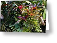 Bromeliad Plant Greeting Card