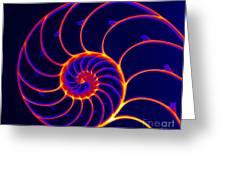 Chambered Nautilus Greeting Card