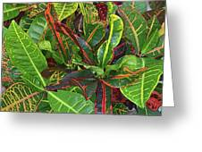 5- Croton Greeting Card
