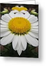 Daisy Dream Greeting Card