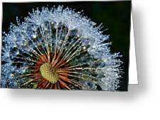 Dandelion With Dew Drops Greeting Card