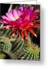 Dark Pink Cactus Flower Greeting Card