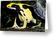 Dyeing Poison Frog Greeting Card