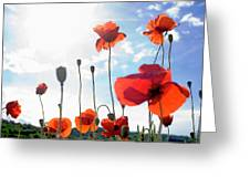 Field Of Poppies. Greeting Card by Bernard Jaubert