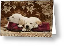 Goldidor Retriever Puppies Greeting Card
