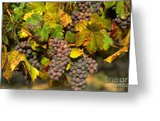 Grapes Growing On Vine Greeting Card