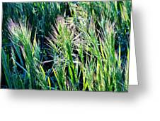 Grass In Bright Sunlight Greeting Card