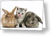 Kitten And Rabbits Greeting Card
