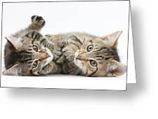 Kitten Companions Greeting Card