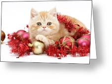 Kitten With Tinsel Greeting Card