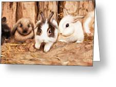 5 Little Rabbits Greeting Card