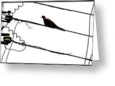 Lonely Bird Greeting Card