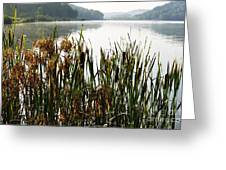 Misty Morning Big Ditch Lake Greeting Card
