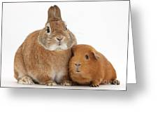 Rabbit And Guinea Pig Greeting Card