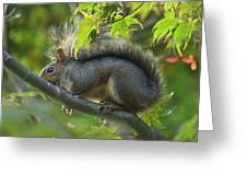 Squirrel Dinner Greeting Card