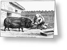 Swine, 19th Century Greeting Card