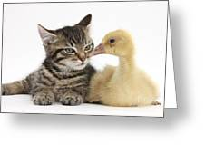 Tabby Kitten With Yellow Gosling Greeting Card