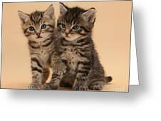 Tabby Kittens Greeting Card