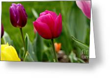 Tulip Garden University Of Pittsburgh  Greeting Card