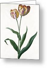 5 Tulip Tulip  Greeting Card