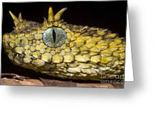 Usambara Eyelash Bush Viper Greeting Card