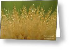 Drops Greeting Card