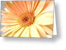 54972c Greeting Card