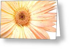 5517c2 Greeting Card