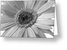 5540c6 Greeting Card
