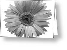 5557c4 Greeting Card