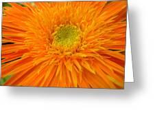 5955 Greeting Card
