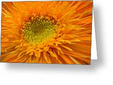 5965 Greeting Card
