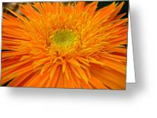 5998 Greeting Card