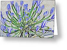 Agapanthus Campanulatus Greeting Card