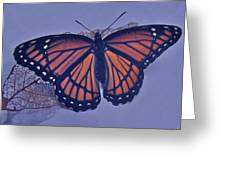 Butterfly Design Collection Greeting Card