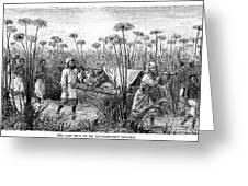 David Livingstone (1813-1873) Greeting Card by Granger