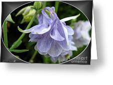 Double Columbine Named Light Blue Greeting Card