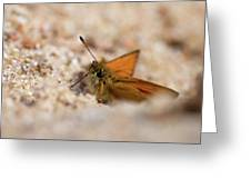 European Skipper Greeting Card