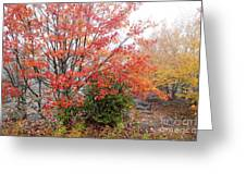 Fall Color Along The Highland Scenic Highway Greeting Card