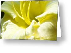 Floral Fractals And Floods Digital Art Greeting Card