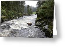 Grizzly Bear Ursus Arctos Horribilis Greeting Card