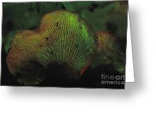 Luminescent Mushroom Panellus Stipticus Greeting Card
