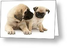 Pug And English Mastiff Puppies Greeting Card by Jane Burton