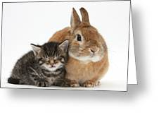 Rabbit And Kitten Greeting Card