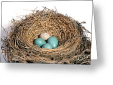 Robins Nest And Cowbird Egg Greeting Card