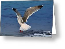 Seagull  Greeting Card by Debra  Miller